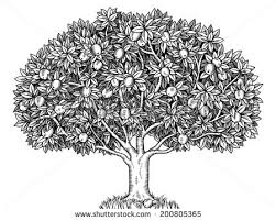 Fruit Trees drawings Download Free Vector Art Stock Graphics