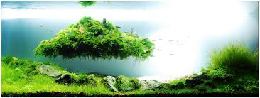 Pin By Marius Steenblock On Aquascaping   Pinterest   Aquascaping Planted Tank Contest Aquarium Design Aquascape Awards How To Create Your First Aquascaping Love Pin By Marius Steenblock On Pinterest The Month September 2008 Pinheiro Manso Creating Nature Part 1 Inspiration A Beginners Guide To Aquaec Tropical Fish Style The Complete Brief Progressive Art Of 2013 Xl Pt2 Youtube Aquadesign Dutch Sytle Aquascape Best Images On Appartment Iwagumi Der Der Firma Dennerle Ist Da Aqua Nano