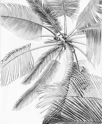 Palm Tree Coloring Sheets