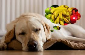 Fresh Pumpkin For Dog Diarrhea by Can Dogs Eat Bananas And Apples Famlii