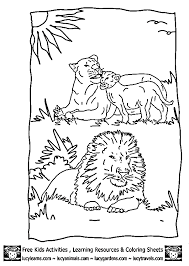 Family Of Lions Coloring Page Cub Lion Pages By Lucy Learns Free