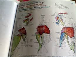 The Anatomy Coloring Boo Cool Book