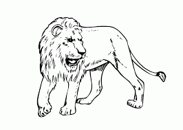 Lion Real Animals Coloring Pages For Kids Printable Pictures Of That Hibernate Free Animal