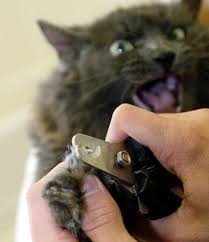 how to cut a cats nails clippers help you avoid squishing the nails rather than