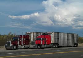 About Livestock Transportation Basics Truckdrivingjobscom July 2017 Trip To Nebraska Updated 3152018 Big Timber Montana Pt 4 Job Posting Dicated Bull Hauler Steves Transport Facebook Minnesota Trucking Companies Mn Driver Benefits Package At Hunt Flatbed Youtube Stidham Inc Marbert Truck Carrying 78 Head Of Cattle Rolls Dash Camera Captures Footage Jobs Express