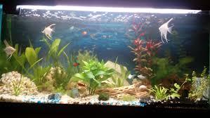 aquarium d eau douce mon petit aquarium d eau douce 250 litres