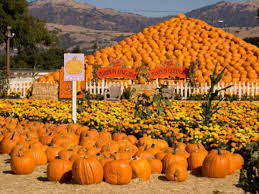 Half Moon Bay Pumpkin Festival Biggest Pumpkin by Eleven Adorable Spots To Go Pumpkin Picking In The Bay Area