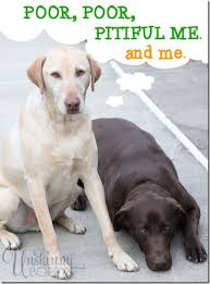 My Dog Stinks And Sheds A Lot by How To Get Rid Of That Stinky Dog Smell Unskinny Boppy