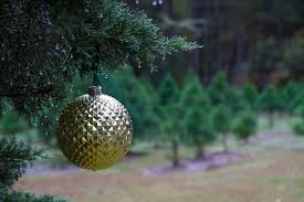 Christmas Tree Aphids by Tree Newsletters