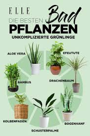 luftverbesserer diese pflanzen sind für die wohnung