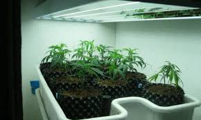 lighting indoor plant decor beautiful light bulbs for indoor