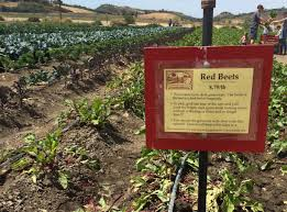 Moorpark Pumpkin Patch Underwood Family Farms offbeat l a ripe for the pickin u0027 experience farm life at