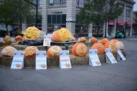 Pumpkin Festival Dayton Ohio by Operation Pumpkin Hamilton Ohio Things To Do See Experience