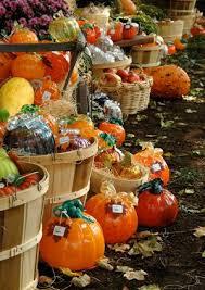 Glass Blown Pumpkins Seattle by 50 Best Glass Pumpkin Patch Images On Pinterest Cool Stuff