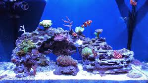 Aquascape Eye Candy - 11 Examples For Inspiration - Marine Depot Blog Is This Aquascape Ok Aquarium Advice Forum Community Reefcleaners Rock Aquascaping Contest Live Rocks In Your Saltwater Post Your Modern Aquascape Reef Central Online There A Science To Live Rock Sanctuary 90 Gallon Build Update 9 Youtube Page 3 The Tank Show Skills 16 How Care What Makes Great Large Custom Living Coral Aquariums Nyc