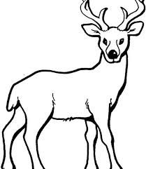 Draw Coloring Pages Deer Fresh On Property Free Kids Important Segment Of 10 Image