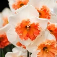 25 trending flower bulbs for sale ideas on bulbs for