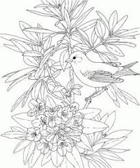 Free Printable Coloring PageWashington State Bird And Flower Goldfinch Rhododendron Educational Printables