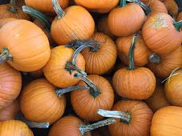 Piedmont Service Center Pumpkin Patch by Search Results
