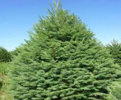 9 Fraser Fir Artificial Christmas Tree by 9 Ft Artificial Fraser Fir Christmas Tree Best Images