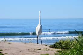 100 Santa Barbara Butterfly Beach Here We Will Explore The Singles Birds Of