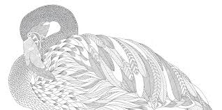 Buy Millie Marottas Animal Kingdom A Colouring Book Adventure Books Online At Low Prices In India