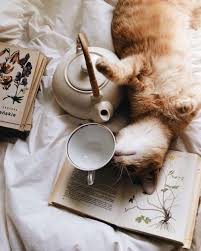 cat coffee books cats coffee
