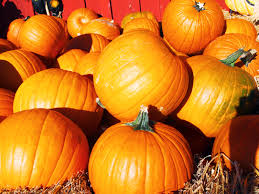 Pumpkin Patch Katy Tx by Best Fall Activities For Families In The Us Traveling Mom