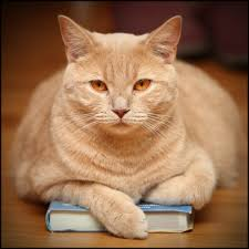 cat on file cat on a book jpg wikimedia commons
