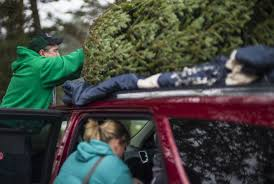 Sams Club Christmas Trees 12 Ft by At 75 A Minnesota Christmas Tree Farmer Isn U0027t Slowing Down