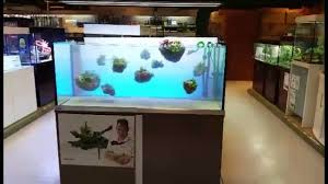 Schwimmende Steine Im Aquarium By Oliver Knott - YouTube Aquascaping Artist Oliver Knott Scapingaquarium Pinterest Schwimmende Stein Steine Im Aquarium By Knott Youtube Aquascapi Sequa Interzoo 2012 Feat Chris Lukhaup Live Part 3 The Island Aquascape Step Aquariology With At The Koelle Zoo Heidelberg New Project Photo Editor Online And Editor Made Teil 1 Inspiration Tips Tricks Love Aquascaping Octopus Aquarium Via Aquac1ubnet