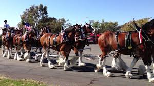 Budweiser Clydesdale Horses And Beer Carriage - YouTube Bud Light Beer Stock Photos Images Alamy Best Ford Commercial Ever Youtube Ten Reasons You Gotta Go To A Monster Truck Show What Are You Waiting For Time Machine Wilson Cos Clyddales The Gazette Shop Little Tikes Cozy Free Shipping Today Overstockcom Carlton United Breweries Cub An Onic Beer Company With Toby Keith Brings Ford Trucks Red Solo Cups To Phoenix Porter County Fair Fords Newest F150 Is A Badass Police Drive Your Definitive 196772 Chevrolet Ck Pickup Buyers Guide X Marks Class We Drive Mercedes New X250 Diesel Ute Reviews Driven