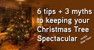 Aspirin Keep Christmas Trees Alive by 6 Tips 3 Myths To Keeping Christmas Tree Spectacular Until New Years