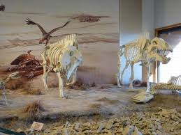 agate fossil beds national monument the group travel leader