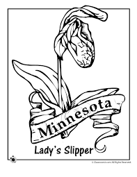 State Flower Coloring Pages Minnesota Page Classroom Jr