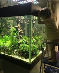 Oliver Knott's 16' Long Tank | Aquariums | Pinterest | Aquariums ... Aquascaping Artist Oliver Knott Scapingaquarium Pinterest Schwimmende Stein Steine Im Aquarium By Knott Youtube Aquascapi Sequa Interzoo 2012 Feat Chris Lukhaup Live Part 3 The Island Aquascape Step Aquariology With At The Koelle Zoo Heidelberg New Project Photo Editor Online And Editor Made Teil 1 Inspiration Tips Tricks Love Aquascaping Octopus Aquarium Via Aquac1ubnet