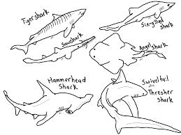 Hammerhead Shark Pumpkin Stencil by Great White Shark Coloring Pages Amazing Shark Coloring Pages