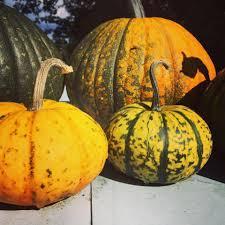 Types Of Pumpkins And Squash by Blog Stefanski Nutrition Services
