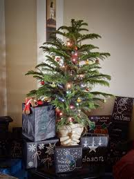 Colorado Springs Christmas Tree Permit 2014 by Welcome To