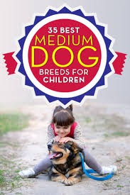 Non Shed Dog Breeds Hypoallergenic by 35 Best Medium And Small Dogs For Kids U2013 Top Dog Tips