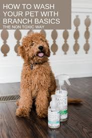 Feeling Frisky: How To Wash Your Pet With | BB Blog | Dog ... 30 Kohls Coupon Promo Code Deals Sep 2021 How To Develop A Successful Marketing Strategy And Updated 2019 Study Island Codes Get 50 Off Grove Collaborative Vs Branch Basics Byside Comparison 7 Safer Cleaning Swaps Giveaway Coupons Real Everything Shop Our Nontoxic Home Products Promotions Grab Your Rm8 Rm18 Shopping Cart Green Living Black Friday Cyber Monday 20 Healthy Alternative Coupons Promo Discount Grey Moon Goddess Codes