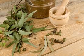 eukalypten eukalyptus die heilpflanze im heimischen