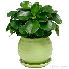 großhandel 20 stücke mini samen büro desktop schlafzimmer luftreinigung topf grüne pflanzen und grüne wasser kresse samen tochter einer bescheidenen