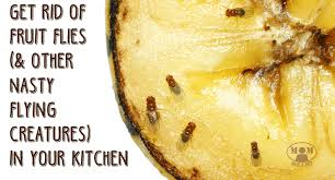 how to rid of annoying fruit flies and gnats in the kitchen mom