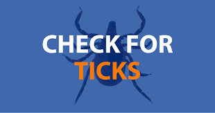 Ticks On Christmas Trees 2015 by Tick Checks The Best Way To Prevent Lyme Disease Cooperative