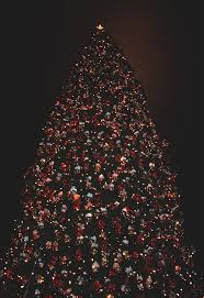 Small Fibre Optic Christmas Trees by 73 Best Christmas Lights Images On Pinterest Christmas Lights