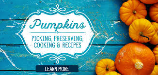 Pumpkin Patch Tulsa Groupon by Discount Grocery Save A Lot