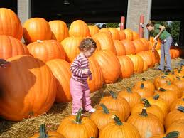 Pumpkin Patch Durham North Carolina by Looking For A Great Pumpkin Check Out The Nc State Farmer U0027s