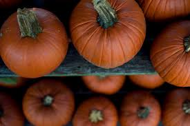 Kent Ohio Pumpkin Patches by How To Make Fresh Pumpkin Puree For Baking Farm And Dairy