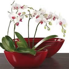 soin d orchidée et transplanter conseils